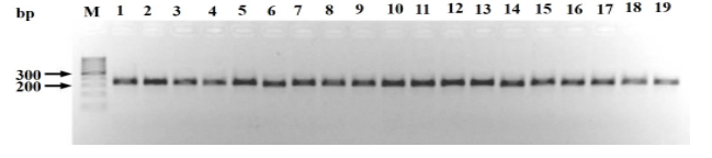 Genetic variability within and among Hypobiotic Haemonchuscontortus isolates from goats in Kenya